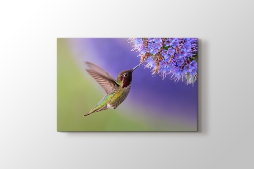 Picture of Hummingbird