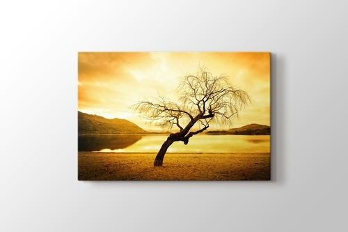 Picture of Willow Tree