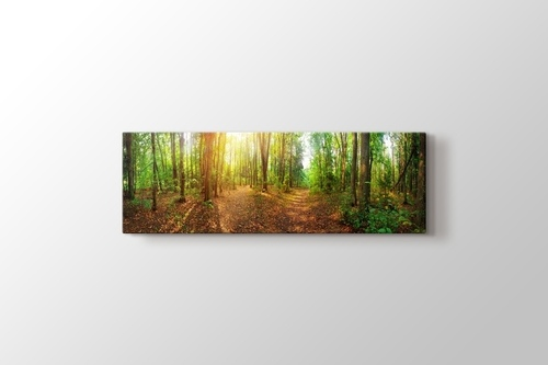 Picture of Forest