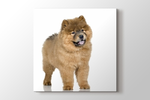 Picture of Puffy Dog