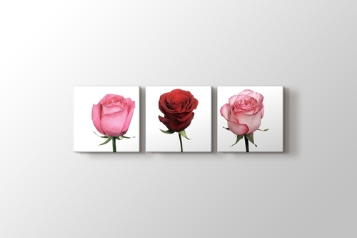 Picture of 3 Roses