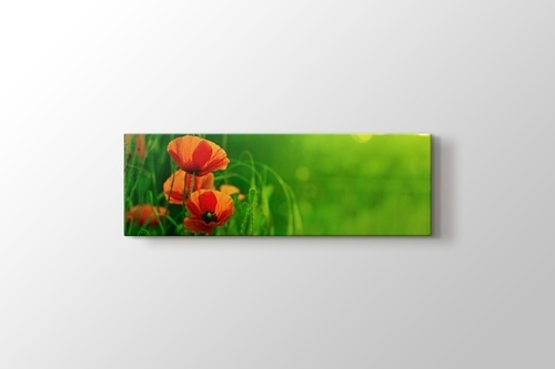 Picture of Red Poppies
