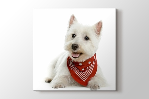 Picture of Terrier