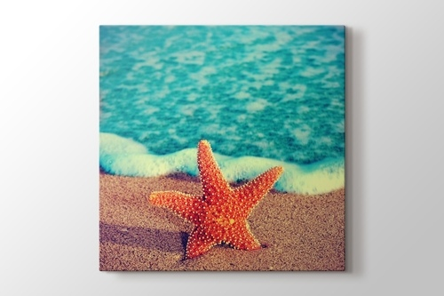Picture of Starfish