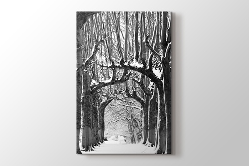 Picture of Snowy Path