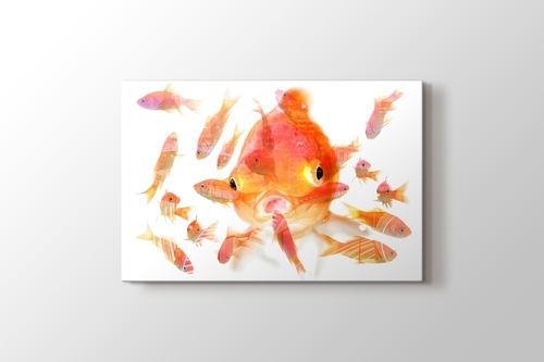 Picture of Fishes