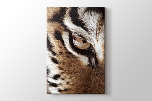 Picture of Eye of the Tiger