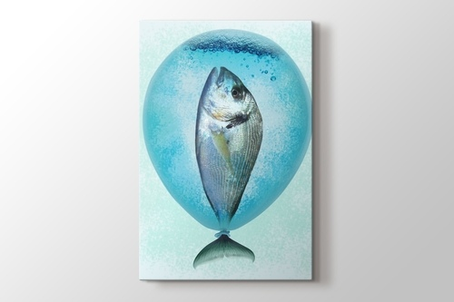 Picture of Balloonfish
