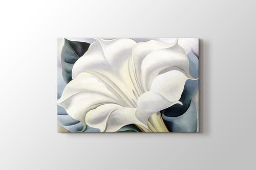Picture of White Trumpet Flower