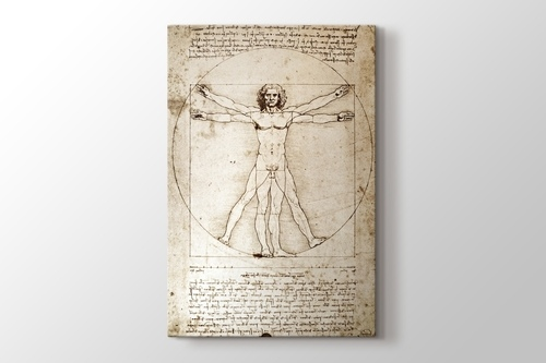 Picture of The Vitruvian Man 1498