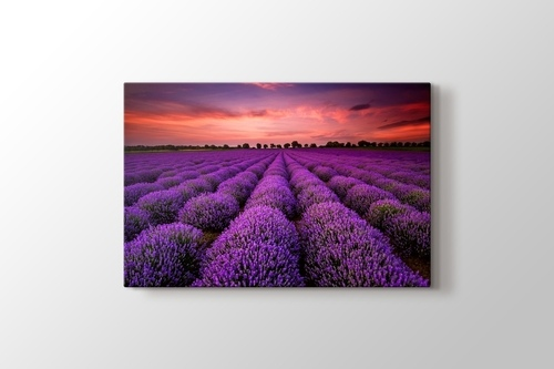 Picture of Lavender Field Sunset