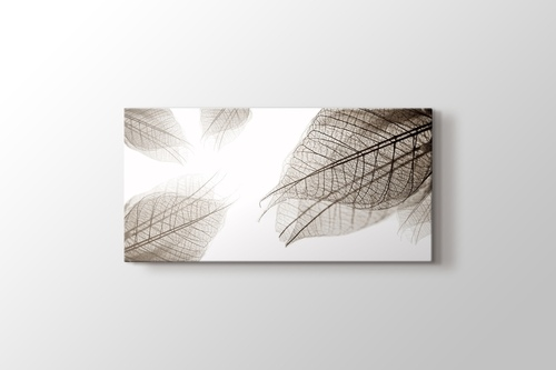 Picture of Leaf