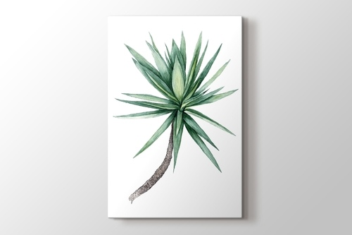 Picture of Watercolor Yucca Tree