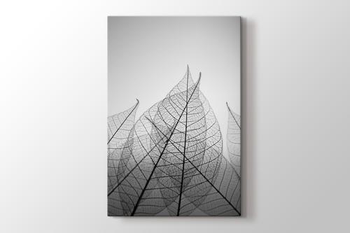 Skeleton Leaves Canvas Print Pluscanvas