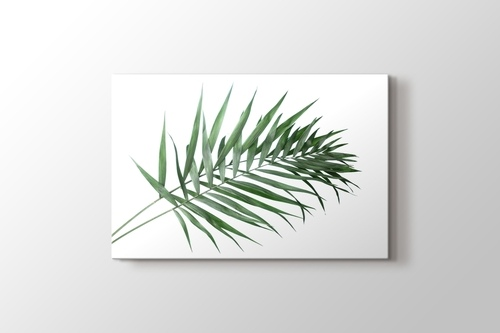 Picture of Beautiful Palm Leaves