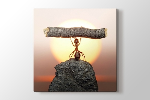 Picture of Ant Power