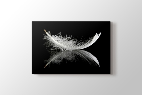 Picture of Feather on Black