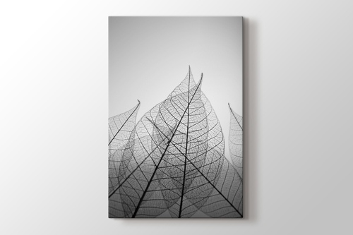 Picture of Skeleton Leaves