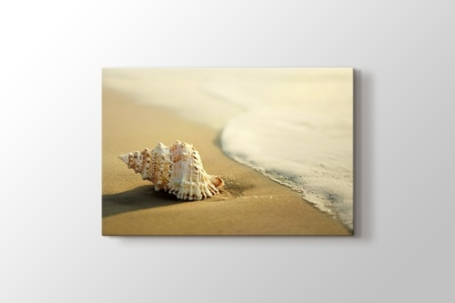 Picture of Seashell on the Beach