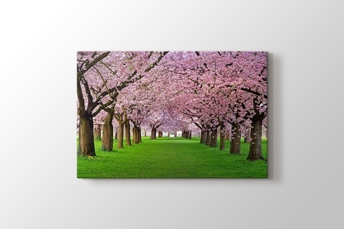 Picture of Cercis Trees