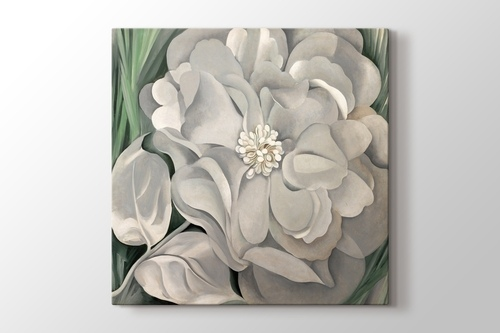 Picture of Georgia O'Keeffe - White Calico Flower