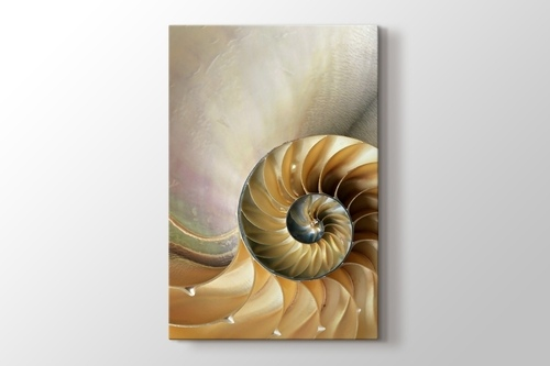 Picture of Nautilus