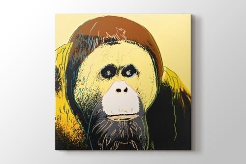Picture of Orangutan