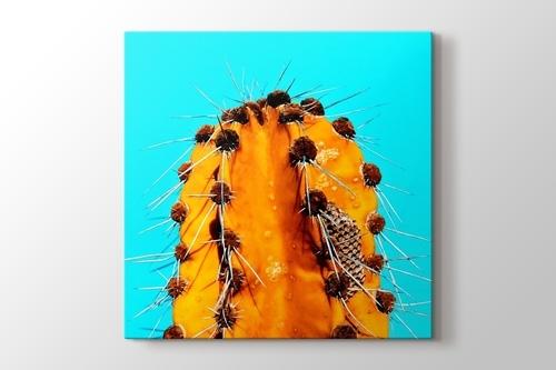 Picture of Orange Cactus