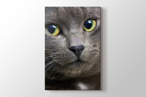 Picture of Black Pussy Cat