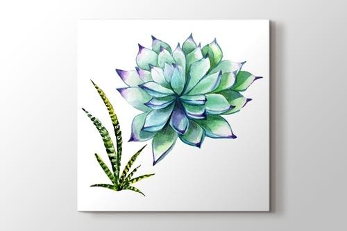 Picture of Succulentus Wildflower