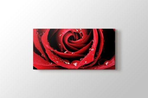 Picture of Red Rose Close Up