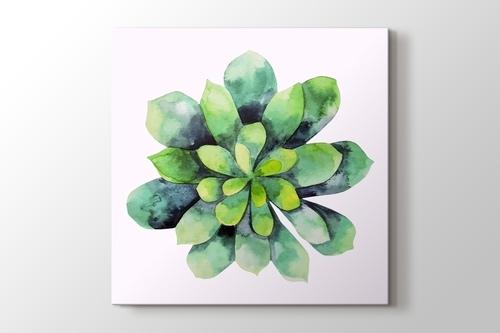 Picture of Cripto Succulent