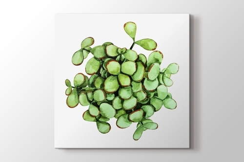 Picture of Cell Succulent