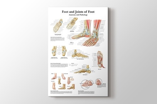 Picture of Foot and Joints of Foot Chart Anatomy and Pathology