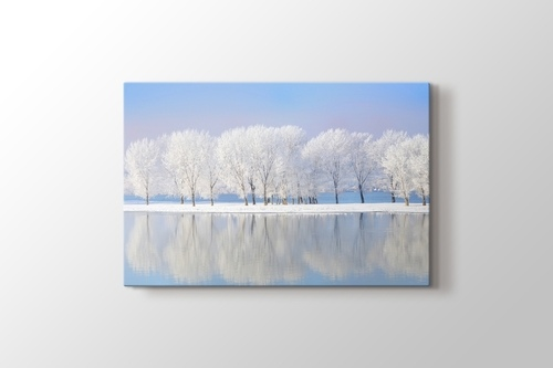 Picture of White Trees