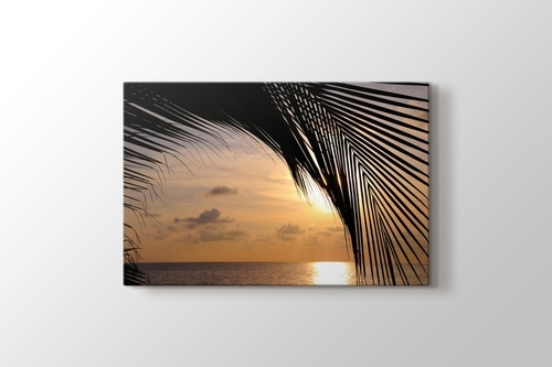 Picture of Sunset and a Palm Tree