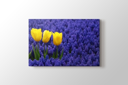 Picture of Three Yellow Tulips