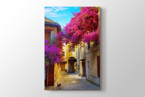 Picture of Judas Tree and Provence