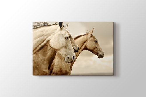Picture of Horses