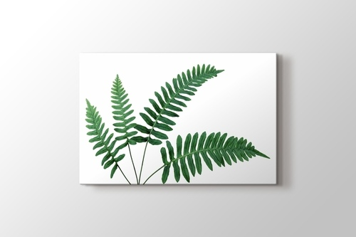 Picture of Fern Leaves