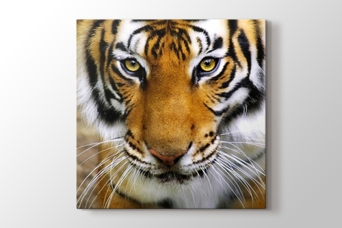 Picture of Tiger Face