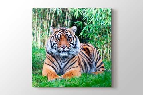 Picture of The Sumatran Tiger