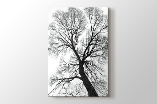 Picture of Tree Perspective
