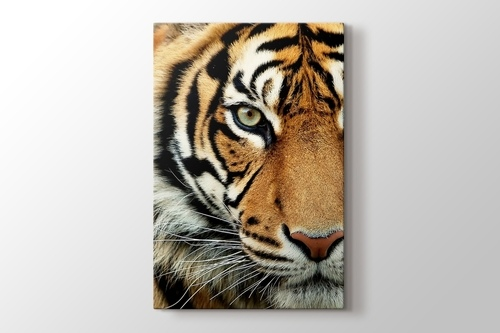Picture of Bengal Tiger