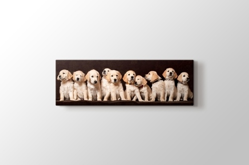 Picture of Little Dogs