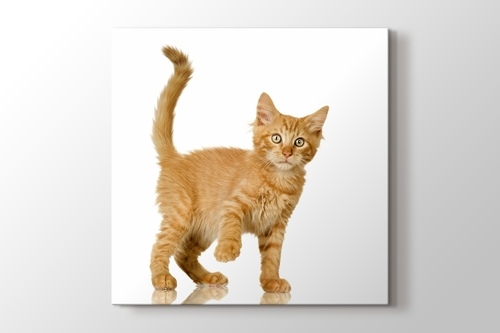 Picture of Tawny Cat