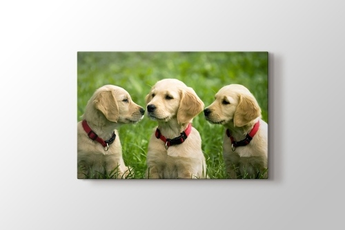 Picture of Three Dogs