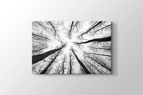 Picture of Long Trees