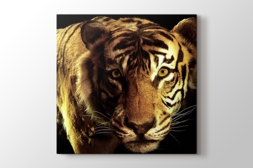 Picture of CloseUp Tiger