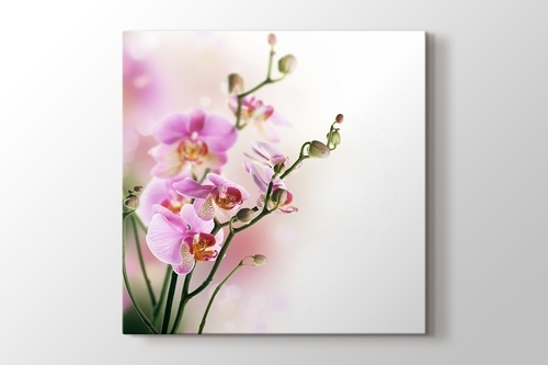 Picture of Orchid